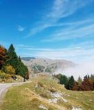 Árboles y niebla fotos de archivo libres de regalías