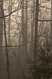 Árboles y niebla Fotos de archivo