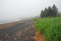 Árboles y niebla en la costa foto de archivo