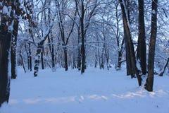 Árboles y nieve Fotos de archivo libres de regalías