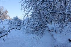 Árboles y nieve Foto de archivo libre de regalías