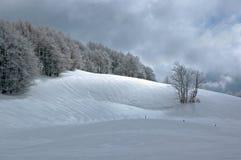 Árboles y nieve. Imagen de archivo libre de regalías