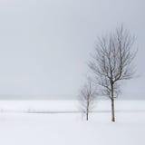 Árboles y nieve del invierno Fotografía de archivo