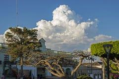 Árboles y nubes en una ciudad mexicana Imágenes de archivo libres de regalías