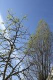 Árboles y opinión del cielo fotografía de archivo