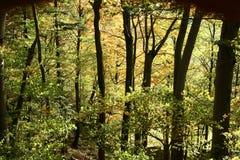 Árboles y otoño del bosque Imagen de archivo libre de regalías