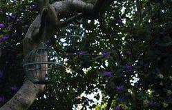 Árboles y pajarera en bosque foto de archivo