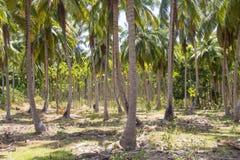Árboles y palmeras de coco en Havelock Fotos de archivo