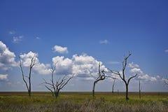 Árboles y pantano esqueléticos, isla magnífica Luisiana Fotos de archivo
