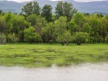 Árboles y pantano a lo largo de una orilla del río Imágenes de archivo libres de regalías