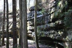 Árboles y pared de la roca Fotos de archivo