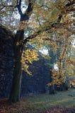 Árboles y paredes en la luz de la tarde Foto de archivo libre de regalías
