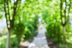 Árboles y paseo borrosos hermosos del verano en parque fotos de archivo