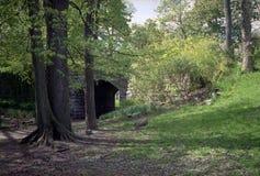Árboles y paso inferior, parque del resorte de Olmsted foto de archivo