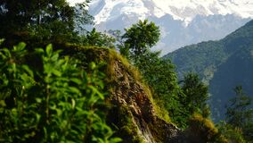 Árboles y pico coronado de nieve en el fondo en las montañas de Himalaya, Nepal almacen de video