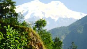 Árboles y pico coronado de nieve en el fondo en las montañas de Himalaya, Nepal almacen de metraje de vídeo