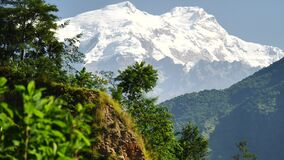 Árboles y pico coronado de nieve en el fondo en las montañas de Himalaya, Nepal metrajes
