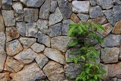 Árboles y piedra Fotos de archivo libres de regalías