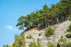 Árboles y piedra de las rocas del acantilado Imagen de archivo libre de regalías