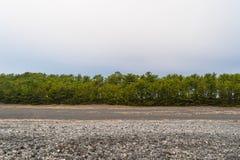 Árboles y piedras cerca de la costa con el cielo blanco para el texto en Shizu fotos de archivo libres de regalías