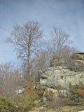 Árboles y piedras con el liquen Imagen de archivo libre de regalías