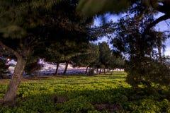 Árboles y piedras en hierba Imagen de archivo