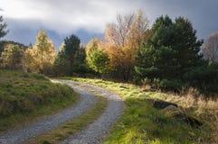 Árboles y pista Fotografía de archivo