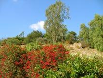 Árboles y plantación florecientes en las colinas del valle de Pomona, California Fotos de archivo libres de regalías