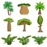 Árboles y plantas de la selva fijados ilustración del vector