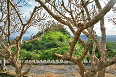 Árboles y plantas hermosos alrededor del templo de Dambulla, Sri Lanka Imagen de archivo