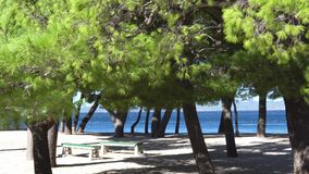 Árboles y playa verdes de pino en mún tiempo con el fuerte viento Croacia Makarska almacen de video