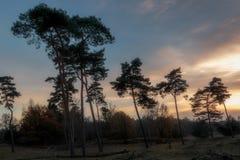 Árboles y puesta del sol Foto de archivo