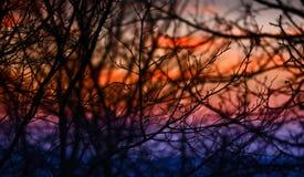 Árboles y puesta del sol Foto de archivo libre de regalías