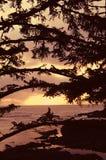 Árboles y puesta del sol de pino Foto de archivo libre de regalías