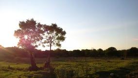 ÁRBOLES y PUESTA DEL SOL en Suráfrica fotos de archivo libres de regalías