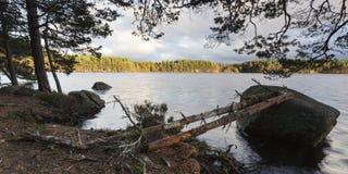 Árboles y raíces del otoño en el lago Garten en el parque nacional de Cairngorms de Escocia Fotos de archivo libres de regalías