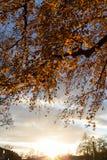 árboles y ramas del color de la puesta del sol del otoño Fotos de archivo libres de regalías