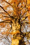 árboles y ramas del color de la puesta del sol del otoño Foto de archivo