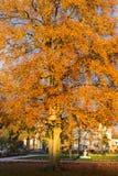 árboles y ramas del color de la puesta del sol del otoño Fotos de archivo