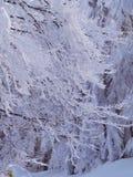 Árboles y ramas nevados foto de archivo