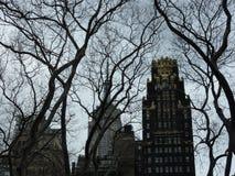 Árboles y rascacielos Imagen de archivo libre de regalías