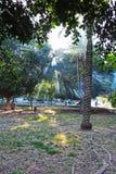 Árboles y rayos del sol en un parque foto de archivo