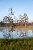 Árboles y reflecions del oso en el agua Fotos de archivo
