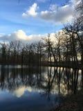 Árboles y reflexión imagen de archivo libre de regalías