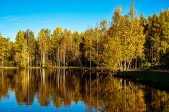 Árboles y reflexión del otoño en el agua de la charca Imágenes de archivo libres de regalías