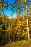 Árboles y reflexión del otoño en el agua de la charca Foto de archivo libre de regalías