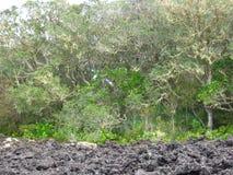 Árboles y roca de la lava Imágenes de archivo libres de regalías