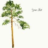 Árboles y rocas de pino stock de ilustración