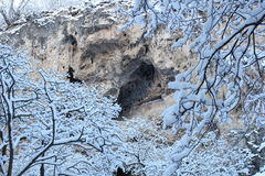 Árboles y rocas del invierno fotografía de archivo libre de regalías