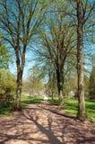 Árboles y siluetas de la primavera a lo largo de una trayectoria del parque Fotografía de archivo